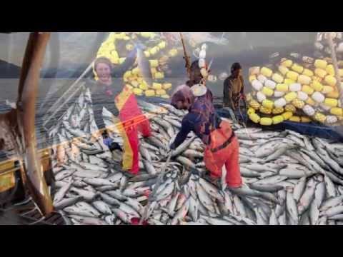 Salmon Seining In SE Alaska '12