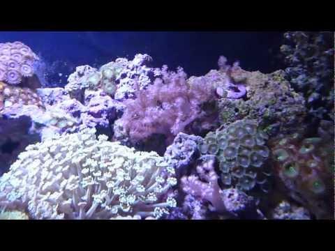 Dubai Reef Aquariumиз YouTube · Длительность: 5 мин1 с