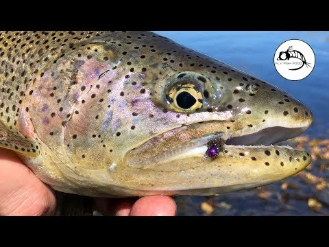 Spring Creek RAINBOWS Fly Fishing In Patagonia