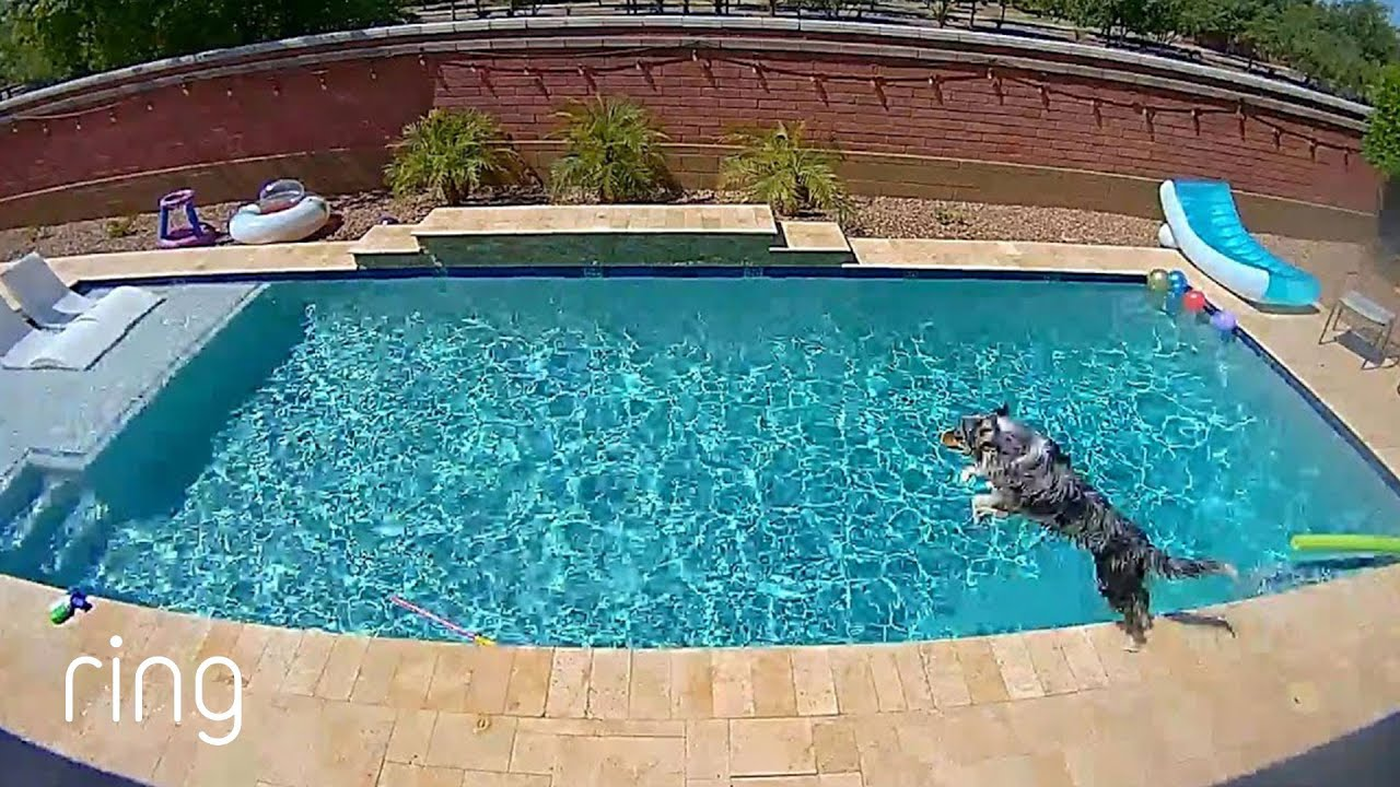 Hamilton, the Dog, Hits The Water & Son Coaches Mom Via a Ring Cam | Neighborhood Stories