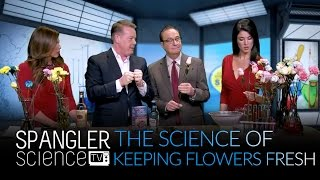 Science of Keeping Your Flowers Fresh