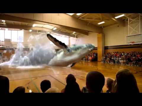 Whale Surprise Jumps into a Gym in Mixed Reality Exciting by Magic Leap