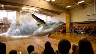 Whale Surprise Jumps into a Gym in Mixed Reality (Exciting) by Magic Leap