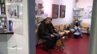 Von wegen mopsfidel - Was Menschen Hunden antun Die Reportage 1/2