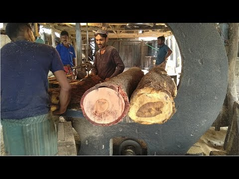 Yellow, Red and Crooked Wood Cutting/Super Fast Wood Cutting in Saw Mill Asia/Expert Wood Workers BD