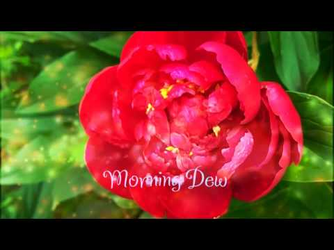 Ragasur - Morning Dew (Violin) | Feel the Positive Vibes of Life [Free MP3 Download]