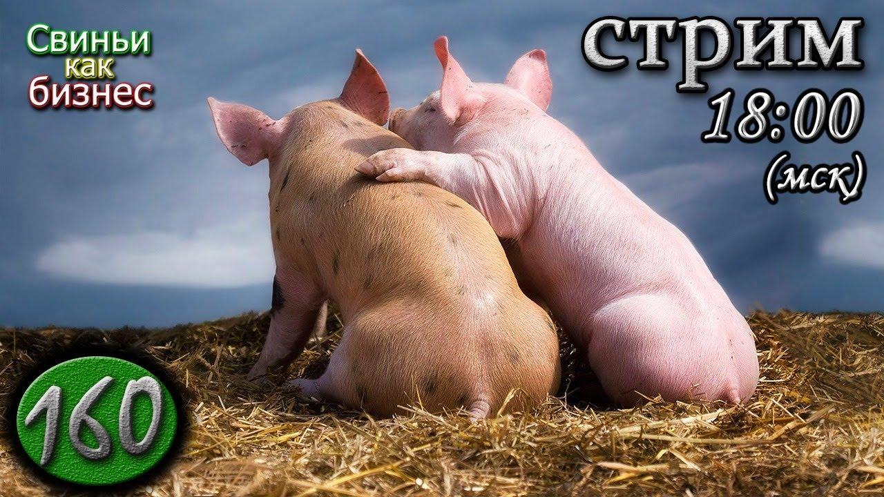 30 июля  Свиноводческие посиделки