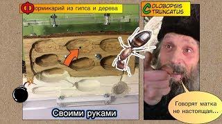 формикарий из гипса и дерева своими руками // Выпуск 3