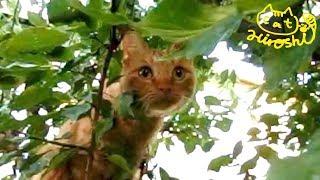 弟ケンちゃんがひろしの目の前で木登り披露。 葉っぱがパラパラ落ちてき...