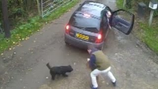 Cctv Of Cocker Spaniels Being Stolen Goes Viral