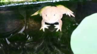 Лягушки и черепахи у Тайского туалета