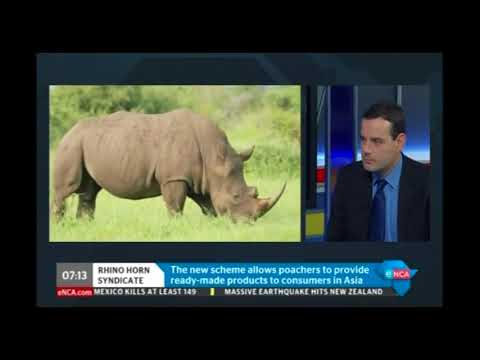 Smuggling routes and techniques in the illegal African rhino horn trade