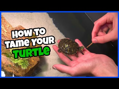 How To Tame Your Pet TURTLE!