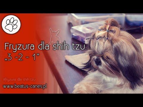 Fryzura Dla Shih Tzu 3 2 1 Youtube