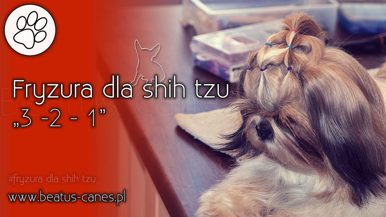 Fryzura Dla Shih Tzu 3 2 1