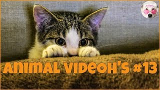 Funny Animals, Funny Pets, Cats, Dogs, Kittens and Puppies - Animals are Amazing! #13