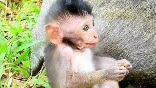 Very Gentle Baby Boy Timo Love Old Mom | Baby Monkey Site On Baby So Cute.