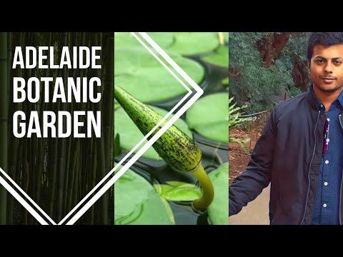 Adelaide Botanic Garden- South Australia