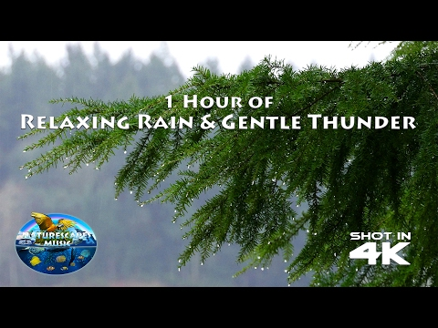 1 Hour Relaxing Rain & Gentle Thunder in 4K for Relaxation, Focus, Study or Sleep.