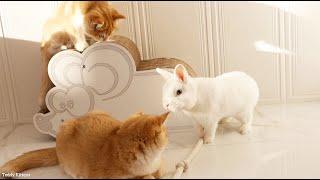 ¿Por qué no juegas conmigo? Gatitos y un conejo blanco.