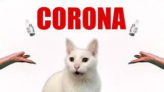 Meow CORONA  Coronavirus Cat Parody