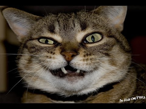 These pets will make you die of laughter !! - Compiled funny cats