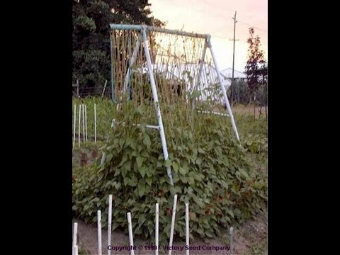 How To Build A Homemade Trellis For Beans Youtube