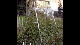 How To Build A Homemade Trellis For Beans