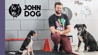 Jak wykorzystać kliker w szkoleniu psa? – TRENING – John Dog