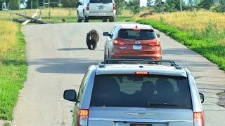 Bear with me!  Bear Country USA, Rapid City, South Dakota