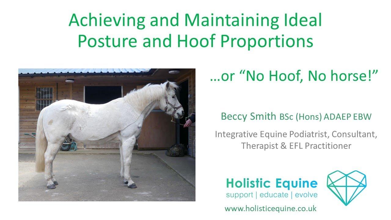 No Hoof, no horse - webinar with Beccy