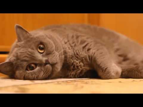Funny Cats Compilation – The Best Cat Vine Compilation 2015