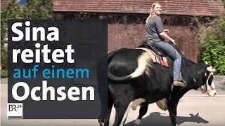 Sina reitet auf einem Ochsen