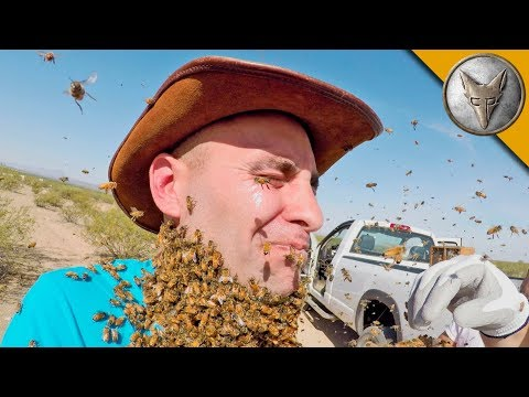 3000 BEES ATTACK MY FACE!