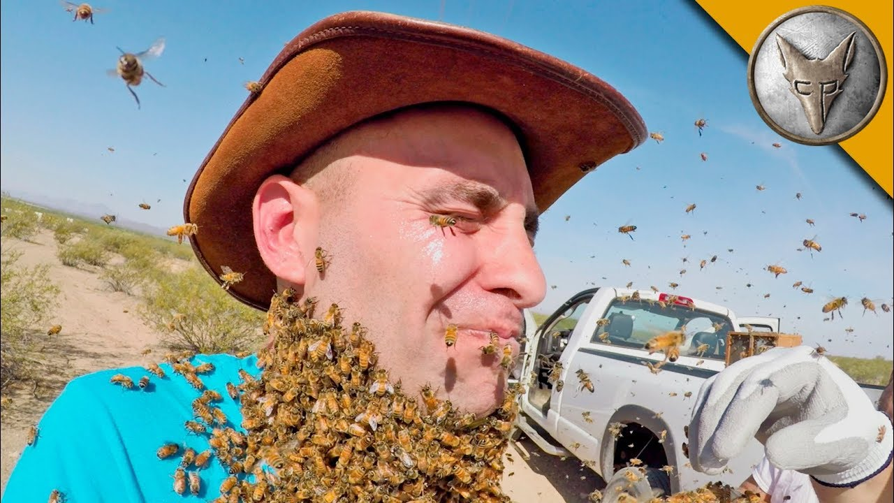3000-bees-attack-my-face