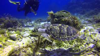Most Beautiful Diving in Cozumel  April 2014