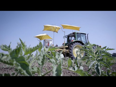 Hi-Tech Farming from UC Davis