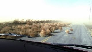 Weather Caught On Camera: Tumble Weed Invasion