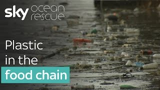 Plastic in the food chain | #OceanRescue