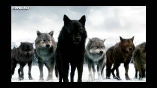 Волки.  Фантастика, ужасы