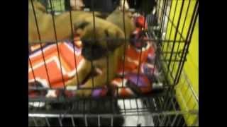Выставка собак 2014 - видеорепортаж с выставки собак всех пород