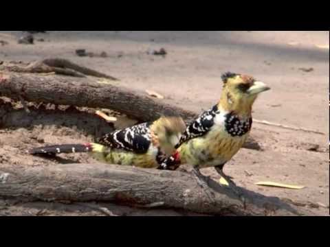 Birds of Africa 4