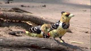 Download Video Birds of Africa 4 MP3 3GP MP4