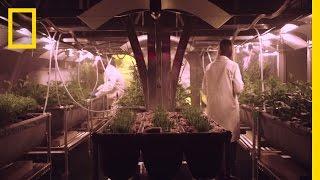 Growing Food on Mars   MARS: How to Survive on Mars