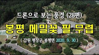 드론으로 보는 풍경 28편 봉평 메밀꽃 필 무렵, 이효…