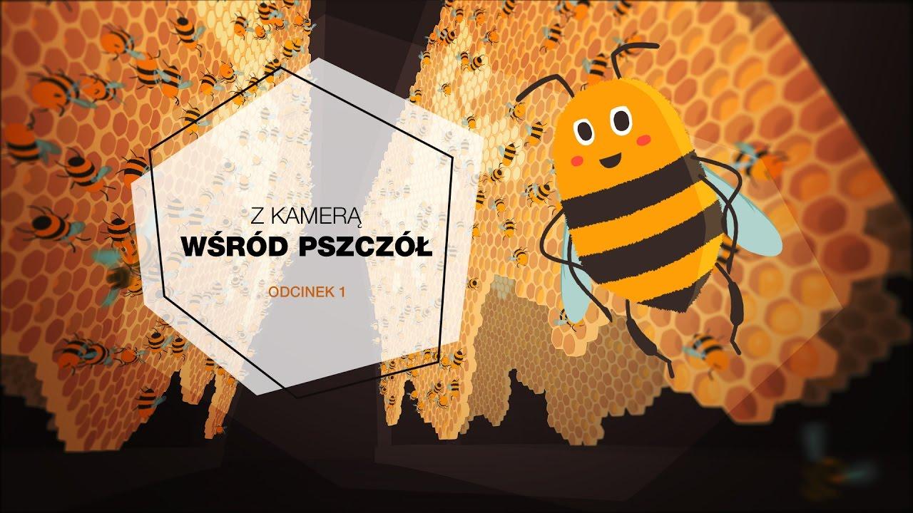 Z Kamerą Wśród Pszczół Odcinek 1