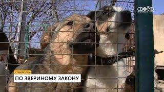 видео Что делать с бродячими собаками?