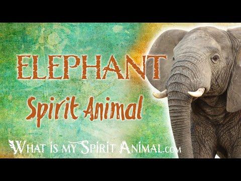 elephant-spirit-animal-|-elephant-totem-&-power-animal-|-elephant-symbolism-&-meanings