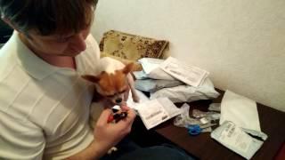 Когтерезка, резак, ножницы для стрижки ногтей у собак и кошек  Распаковка посылки aliexpress