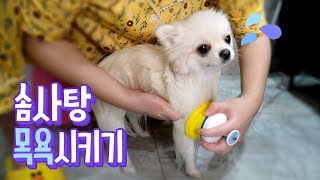 ENG SUB _ Bathing our dirty Cotton candy * Review of Pethroom\'s Shower head